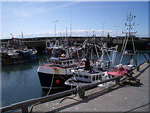 NO5402 : Pittenweem, harbour scene by Astrid H