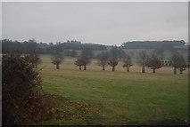 TQ5244 : Avenue of trees, Penshurst Park by N Chadwick
