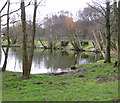 TG4904 : One of the fishing ponds at Hall Farm Fishery by Evelyn Simak