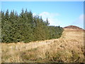 NR9776 : Forest edge by John Ferguson
