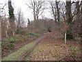NU1914 : Track through Long Plantation, Denwick by Les Hull
