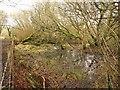 SX0560 : Marshy woodland,  Breney Common by Derek Harper