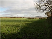 SX0360 : Field near Little Trevellion by Derek Harper