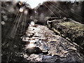 SJ9791 : River Etherow by David Dixon