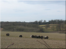 TQ2156 : Silage bales near Round Wood by Stephen Craven