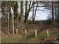 ST4294 : Bridleway, Wentwood by John Lord