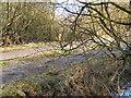 SD7706 : Woodland Track by David Dixon