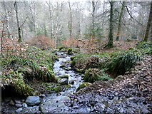NH5966 : A small forest burn flowing into the River Glass by sylvia duckworth