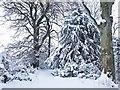 NU1228 : Woodland Winter by Alfie Tait