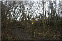TQ4540 : Waymarker, Sussex Border Path by N Chadwick