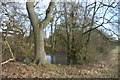 TQ4446 : Pond by the Eden Valley Walk by N Chadwick