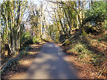 SH5571 : Path from Church Island by David Dixon