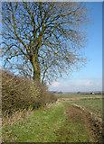 TF2488 : Hedgerow Tree, Calcethorpe by Kate Nicol