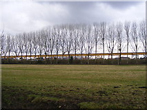 SU4619 : View of line of trees west from the Itchen Way by peter clayton