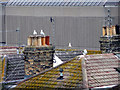 TQ2904 : Rooftops of Hove, East Sussex by Christine Matthews