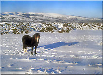 SO2455 : Ponies on the Hergest Ridge - 3 by Trevor Rickard