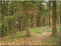 SO5212 : Footpath through Beaulieu Wood by Derek Harper