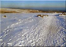 SO2656 : Offa's Dyke Path on Hergest Ridge by Trevor Rickard