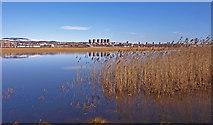 NS4870 : Newshot Island,River Clyde by wfmillar