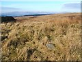 NS4377 : Cup-marked stone on Roundwood Hill by Lairich Rig