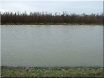 TL4176 : Flooded copse - The Ouse Washes near Earith by Richard Humphrey