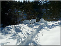 NH6271 : Track to Fyrish monument by sylvia duckworth