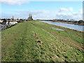 TF4004 : The river bank at Guyhirn by Richard Humphrey