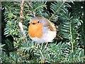 SK5134 : Fat Robin by Richard Leake