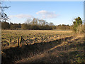 TL8293 : Lynford Arboretum paddock by Hugh Venables
