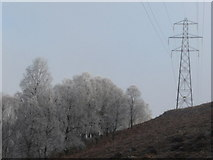 NN8759 : Electricity pylon and frosted birch trees by Russel Wills