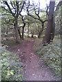 SK2998 : Wharncliffe Woods by Burgess Von Thunen