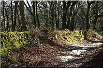 SX0782 : Woodland Path to Newhall Manor by Tony Atkin