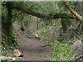 SO8280 : The North Worcestershire Path near Drakelow by Roger  Kidd