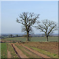 SO7890 : Track and oak trees near Beobridge, Worcestershire by Roger  Kidd
