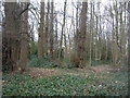 SU9094 : Patch of remaining woodland by Enttauscht
