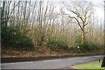 TQ7035 : Kilndown Wood off Riseden Lane by N Chadwick