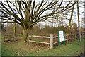 TQ6935 : Large tree on the edge of Kilndown Recreation Ground by N Chadwick