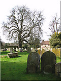 TM1579 : The church of St Andrew in Scole - churchyard by Evelyn Simak