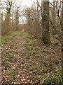 ST4834 : Leigholt Wood by Derek Harper