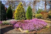 SJ7243 : Heather display at Bridgemere Garden World by Steve Daniels