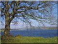 N9509 : Poulaphouca reservoir by Sarah777