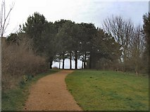 TQ4002 : Trees in Chatsworth Park by Paul Gillett