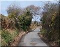 SH4240 : Between the hedgerows - the Llangybi road by Eric Jones