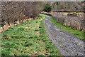 J3370 : The Lagan Meadows walk, Belfast (17) by Albert Bridge