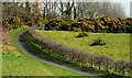J3370 : The Lagan Meadows walk, Belfast (26) by Albert Bridge
