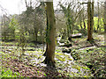 SP5709 : Springs in the grounds of Stanton House by Stephen Craven