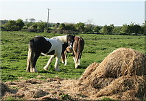 S8097 : Crookstown Horses, County Kildare by Sarah777