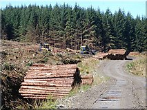 NR7565 : Timber extraction by Patrick Mackie