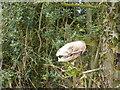SK2650 : Badger skull on Gorsey Lane by Peter Barr