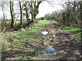 TM2492 : Footpath south of Lundy Green by Evelyn Simak